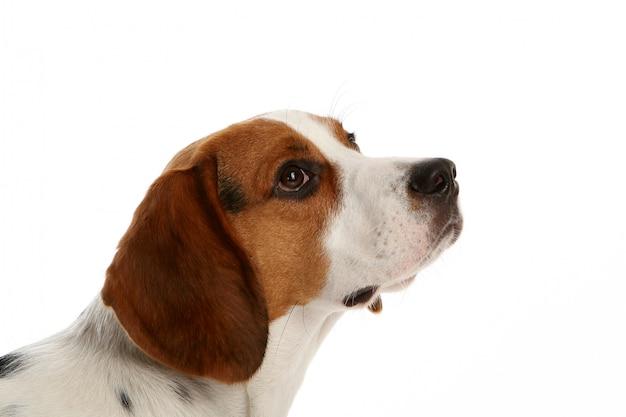 Mooie funy hond Gratis Foto