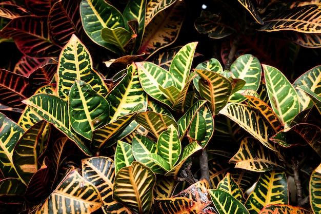 Mooie gedetailleerde tropische bladeren Gratis Foto