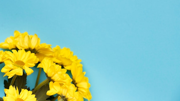 Mooie gele bloemen op blauwe achtergrondexemplaarruimte Gratis Foto