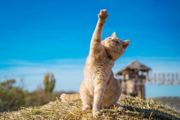 Mooie gember kat zitten spelen op de aard Premium Foto
