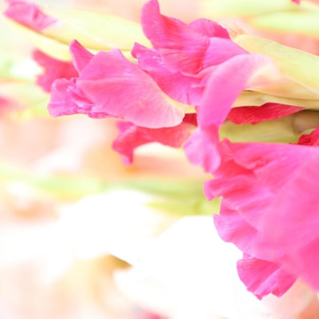 Mooie gladiolen bloemen met witte achtergrond multifunctioneel Gratis Foto