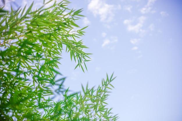 Mooie hemelachtergrond met bamboebladeren. Premium Foto