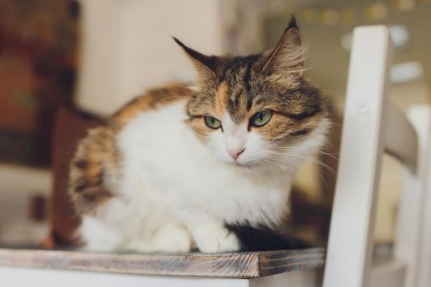 Mooie huisdier kat zitten thuis wegkijken. Premium Foto