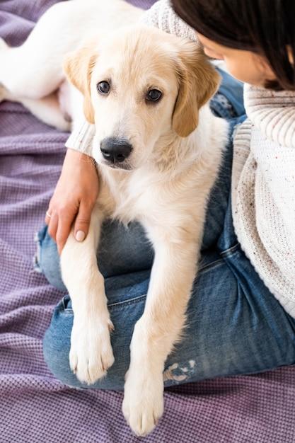 Mooie jonge retrieverhond thuis in de armen van de eigenaar Premium Foto