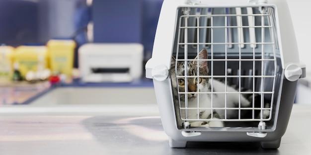 Mooie kat in kooi bij veterinaire kliniek Gratis Foto