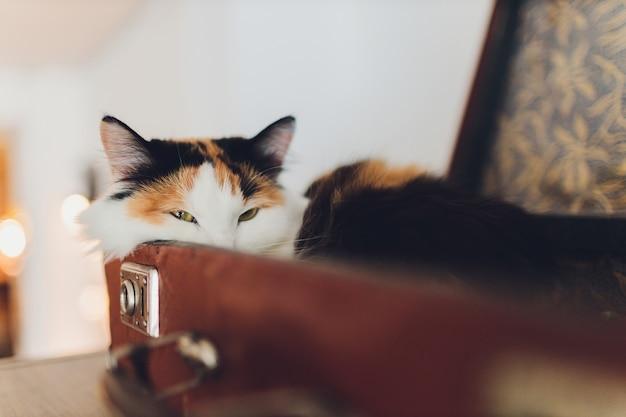 Mooie kat liggend op de reistas. Premium Foto