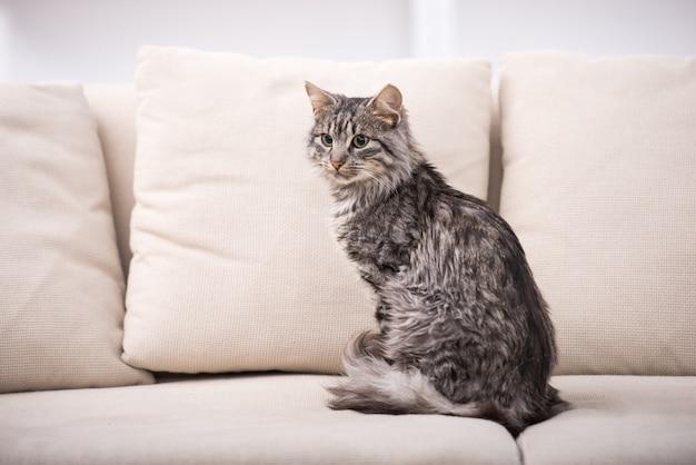 Mooie kat zit op een bank. Premium Foto