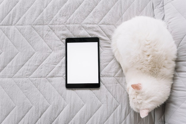 Mooie kattensamenstelling met technologisch apparaat Gratis Foto