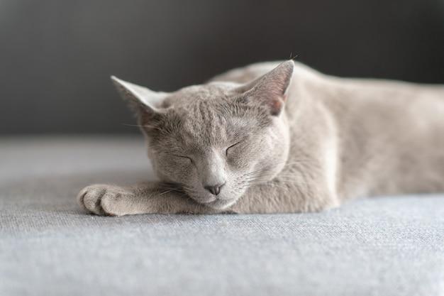 Mooie kitten slapen op bed. Premium Foto
