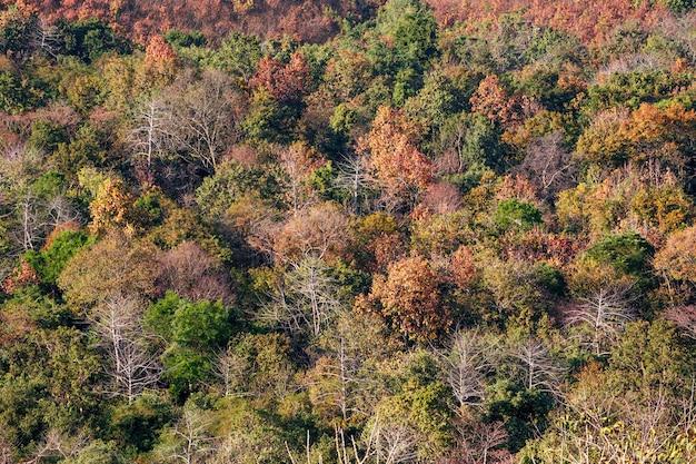 Mooie kleuren van het bos in het droge seizoen. Premium Foto