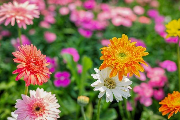 Mooie kleurrijke bloemachtergrond. Gratis Foto
