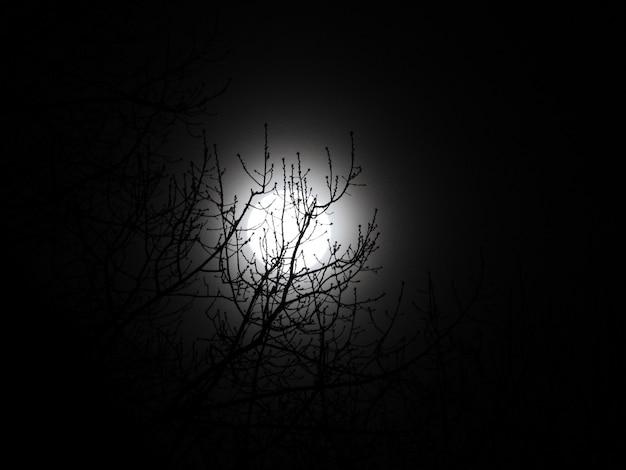 Mooie lage hoek shot van een kale boom en de maan 's nachts Gratis Foto