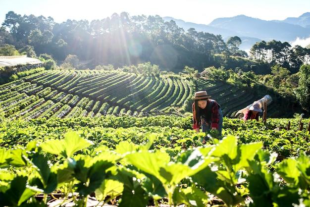 Mooie landbouwersvrouw die aardbeilandbouwbedrijf controleert Gratis Foto
