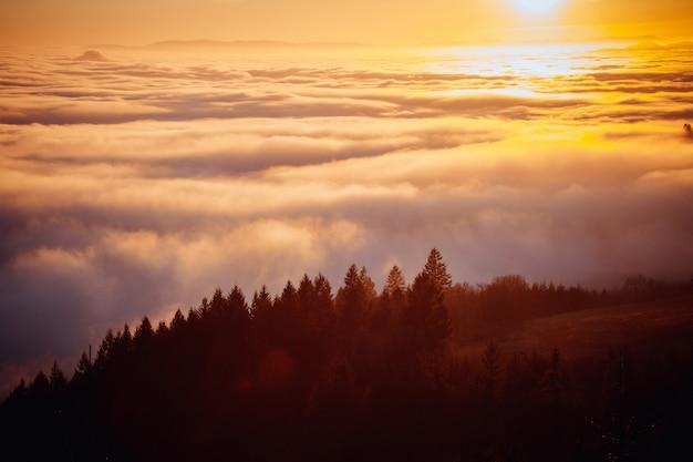 Mooie luchtfoto van een bos op een heuvel met prachtige mist in de verte geschoten bij zonsopgang Gratis Foto