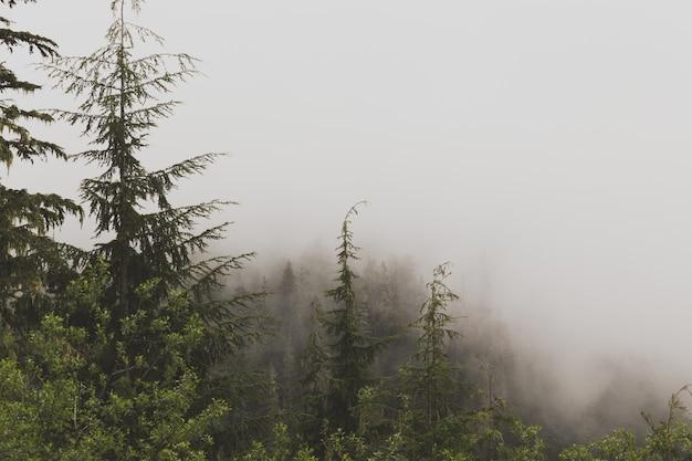 Mooie luchtfoto van een mistig bos Gratis Foto