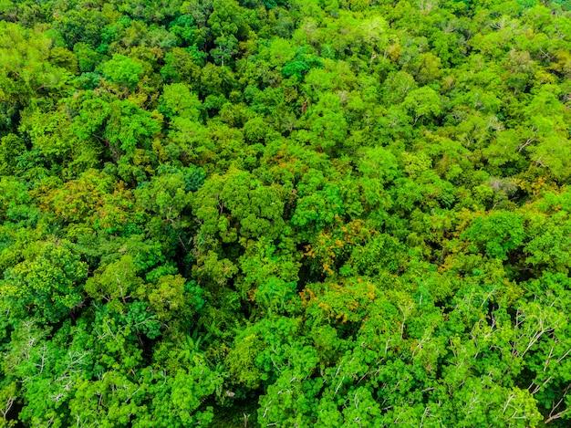 Mooie luchtmening van aardbomen in het bos Gratis Foto