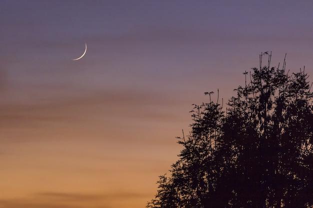 Mooie maan in de kleurrijke lucht boven de bomen Gratis Foto