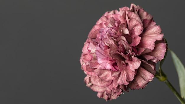 Mooie macro bloeide bloem Gratis Foto