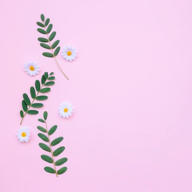 Mooie madeliefjes en bladeren op lichtroze achtergrond Gratis Foto