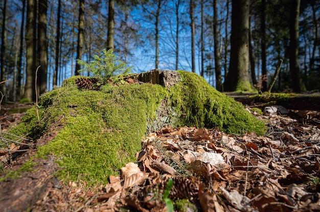 Mooie met mos bedekte boomstam in het bos gevangen in neunkirchner höhe, odenwald, duitsland Gratis Foto