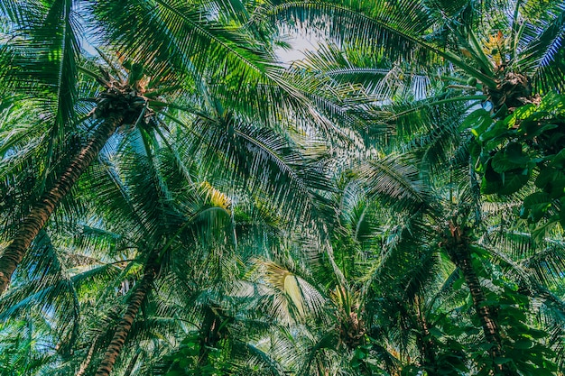 Mooie openluchtaard met kokosnotenpalm en blad op blauwe hemel Gratis Foto