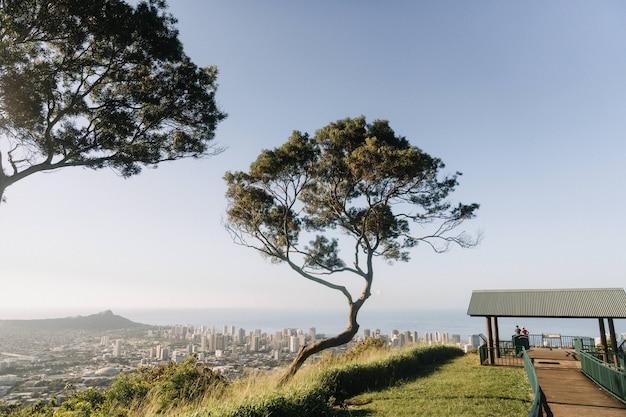 Mooie opname van een boom in de bergen met uitzicht op honolulu, hawaii in de vs. Gratis Foto
