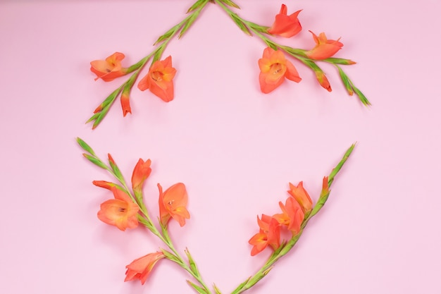 Mooie oranje gladiolenbloem op roze achtergrond Premium Foto
