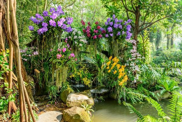 Mooie orchidee uit de tuin Premium Foto