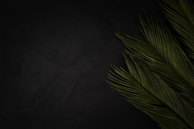 Mooie palmen op zwart met copyspace Gratis Foto