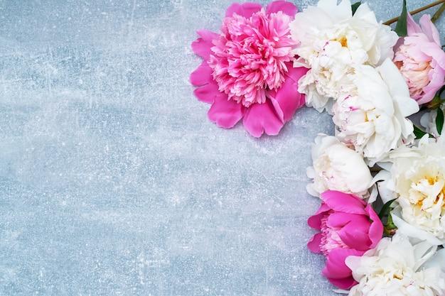 Mooie pioenbloemen op grijze achtergrond. Premium Foto