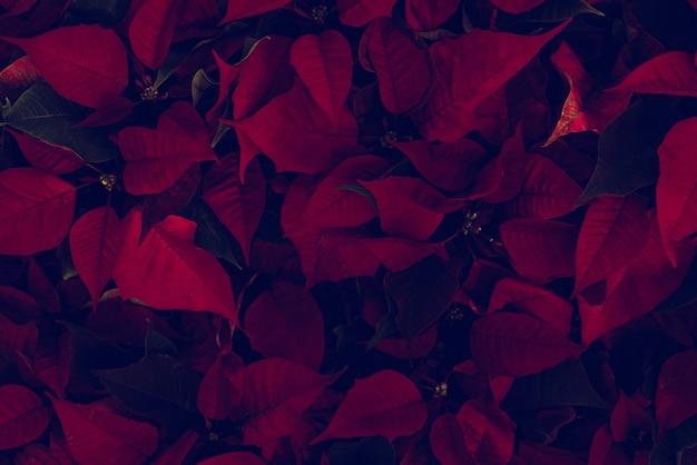 Mooie rode bladeren Premium Foto
