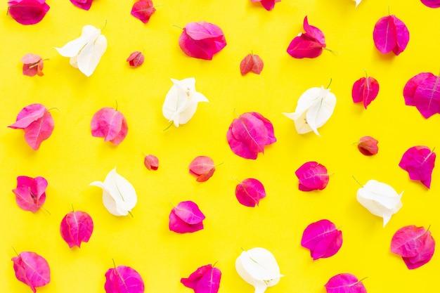 Mooie rode en witte bougainvilleabloem op gele achtergrond. Premium Foto