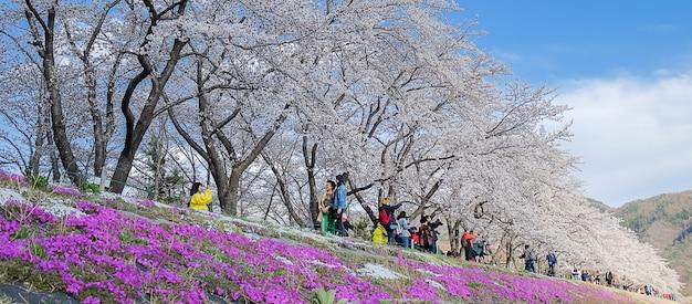 Mooie roze cherry blossom die bij kawaguchiko-meer bloeien Premium Foto