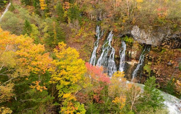 Mooie shirahige-waterval en kleurrijke boom in de herfst Premium Foto