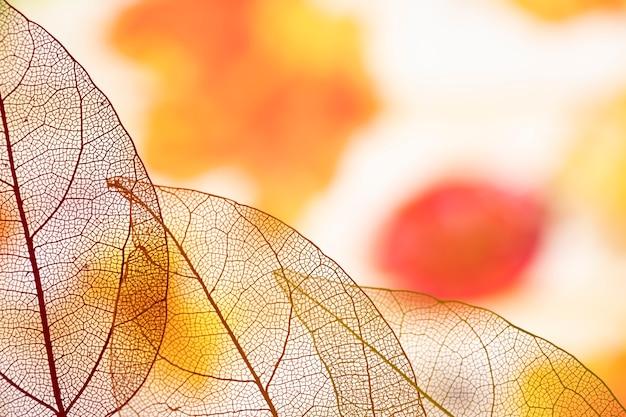 Mooie transparante oranje herfstbladeren Gratis Foto