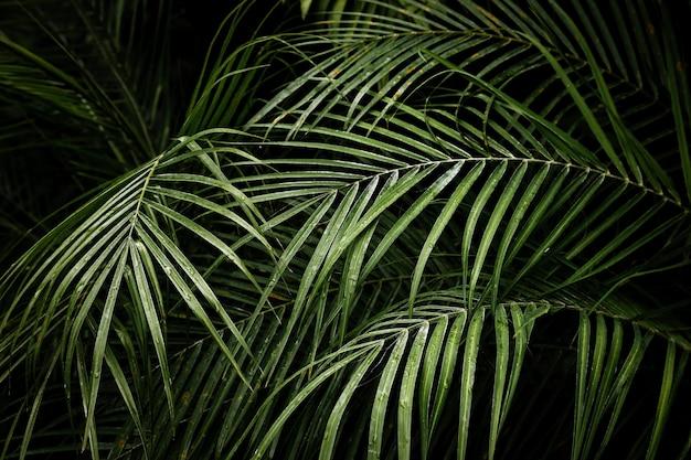 Mooie tropische areca palmbladen Gratis Foto
