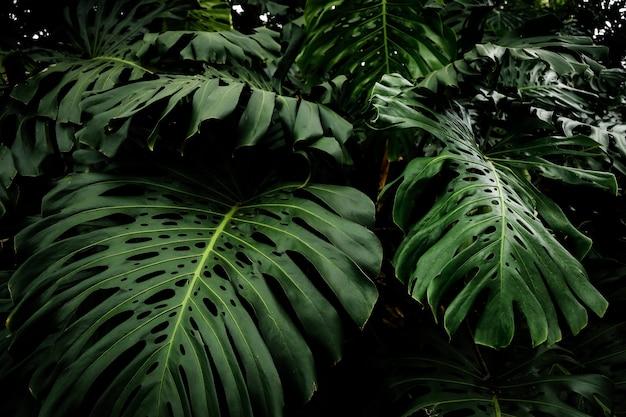 Mooie tropische philodendronbladeren Gratis Foto