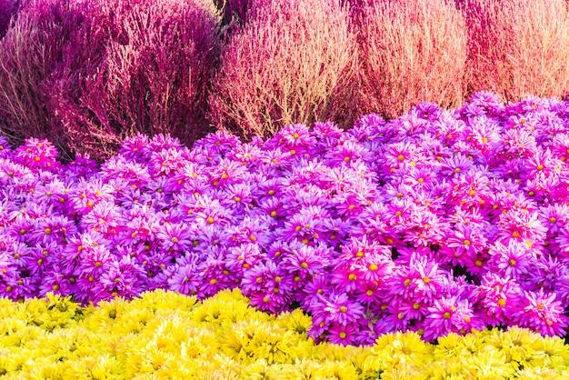 Mooie tuin en bloem Gratis Foto