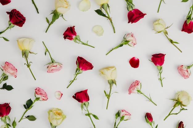 Mooie verse rozen in plat lag Gratis Foto