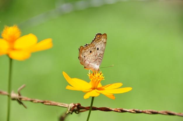 Mooie vlinder over een gele bloem op een zomerdag greenfield Premium Foto
