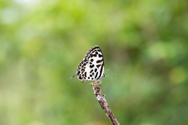Mooie vlinder Gratis Foto