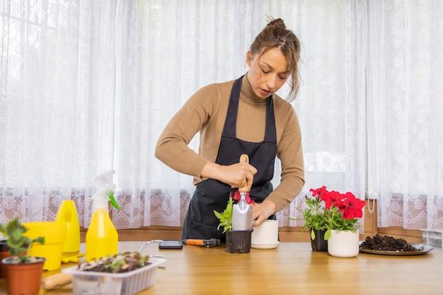 Mooie vrouw bloemist herplant zaailing van bloeiende petunia's van plastic tot keramische pot Premium Foto