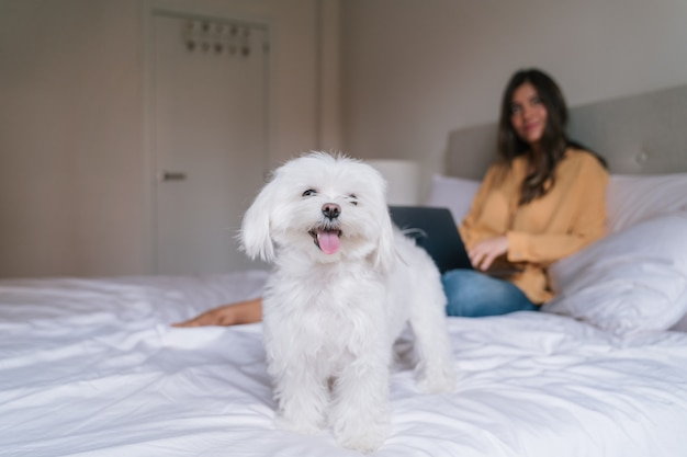 Mooie vrouw die aan laptop thuis met haar hond werkt Premium Foto