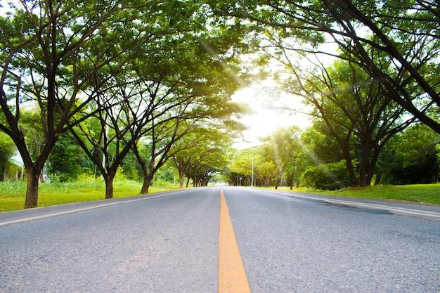 Mooie wegen met groene bomen langs de route op zonnige lentedag. Premium Foto
