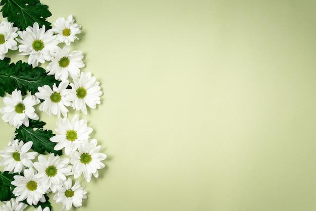 Mooie, witte chrysanten liggen op een groene achtergrond. Premium Foto