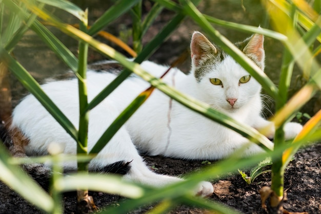 Mooie witte kat die op de grond legt Gratis Foto