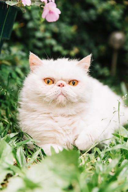 Mooie witte kat in de natuur Gratis Foto