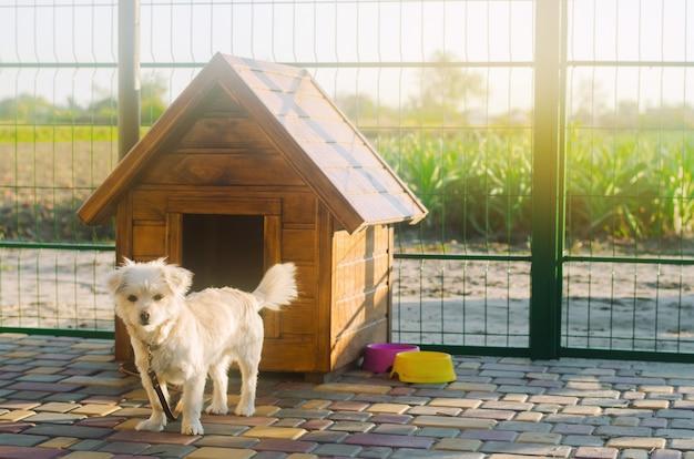 Mooie witte poochhond dichtbij de cabine op een zonnige dag Premium Foto