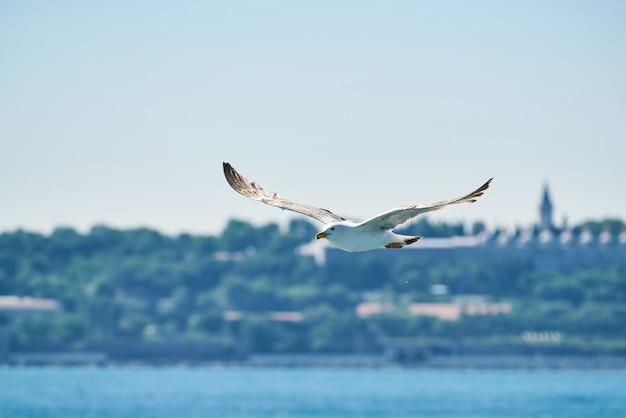 Mooie zeemeeuw die in de lucht vliegt Premium Foto