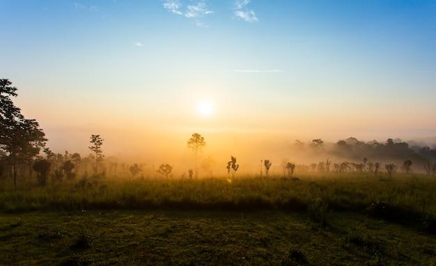Mooie zomerse landschap in de bergen met de zonsondergang Premium Foto